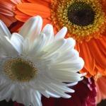 Daily Affirmations: I Choose Joy