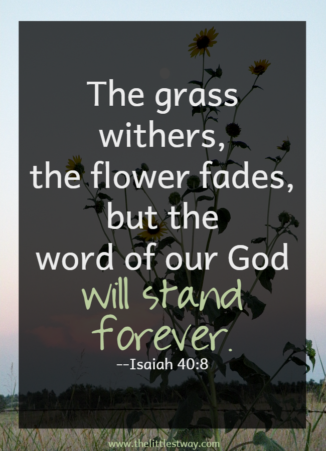 Bible Quotes About God's Word