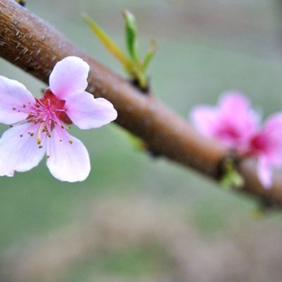 Daybook Online Journal: Spring?