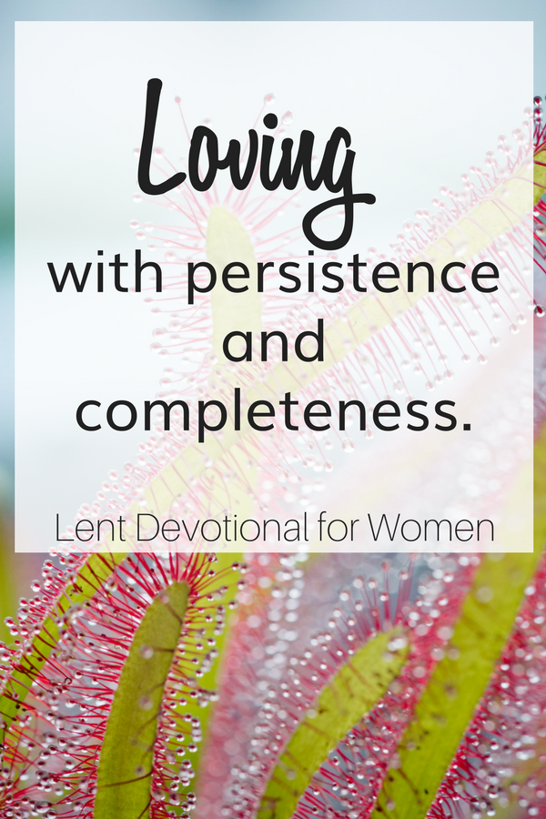 A bright colored plant to highlight the title of loving with persistence and completeness for the Lent Devotional for Women.