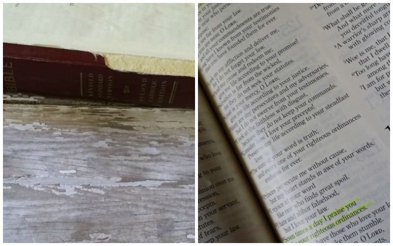 Which Catholic Bible Should I Use The Littlest Way