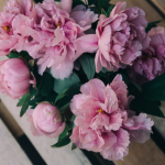 Lent Devotional for Women: Passion Sunday
